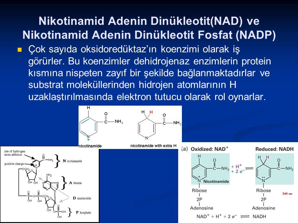 Nikotinamid Adenin Dinükleotit(NAD) ve Nikotinamid Adenin Dinükleotit Fosfat (NADP) Çok sayıda oksidoredüktaz'ın koenzimi olarak iş görürler. Bu koenz
