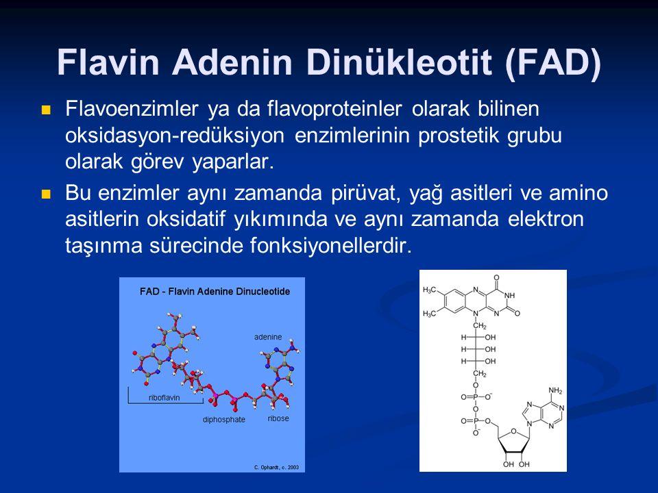Flavin Adenin Dinükleotit (FAD) Flavoenzimler ya da flavoproteinler olarak bilinen oksidasyon-redüksiyon enzimlerinin prostetik grubu olarak görev yap
