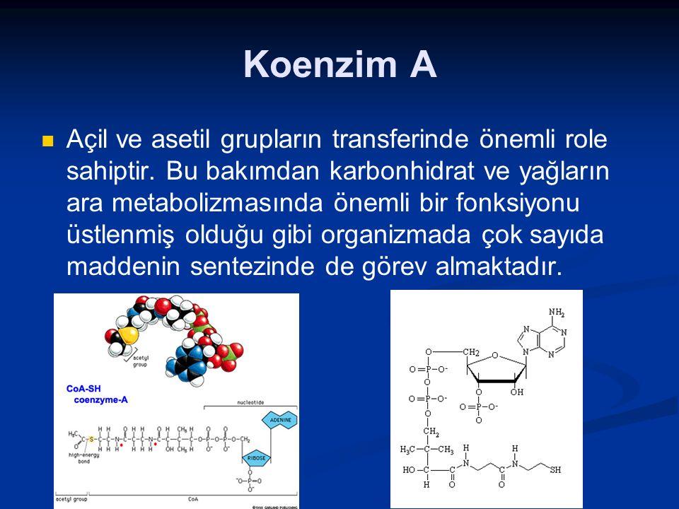 Koenzim A Açil ve asetil grupların transferinde önemli role sahiptir. Bu bakımdan karbonhidrat ve yağların ara metabolizmasında önemli bir fonksiyonu