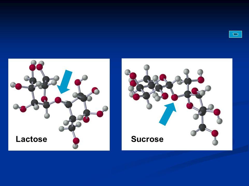SucroseLactose