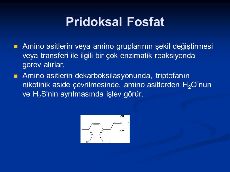 Pridoksal Fosfat Amino asitlerin veya amino gruplarının şekil değiştirmesi veya transferi ile ilgili bir çok enzimatik reaksiyonda görev alırlar. Amin