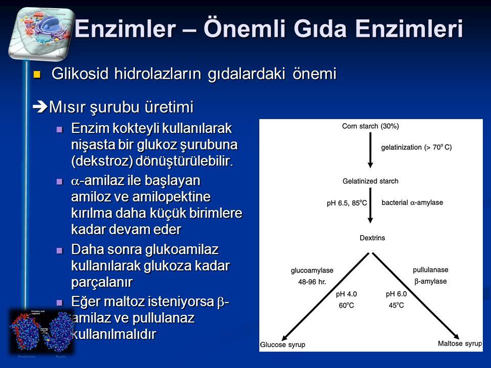 Enzimler – Önemli Gıda Enzimleri Glikosid hidrolazların gıdalardaki önemi  Mısır şurubu üretimi Enzim kokteyli kullanılarak nişasta bir glukoz şurubu