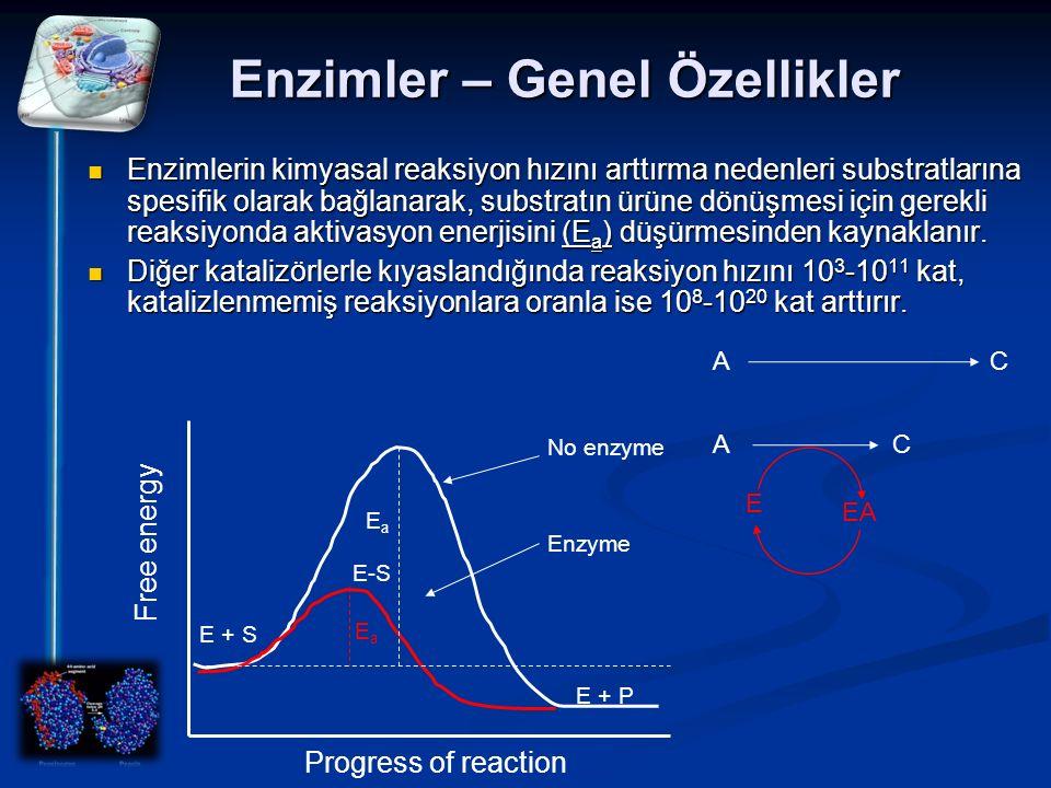 Enzimler – Genel Özellikler Enzimlerin kimyasal reaksiyon hızını arttırma nedenleri substratlarına spesifik olarak bağlanarak, substratın ürüne dönüşm