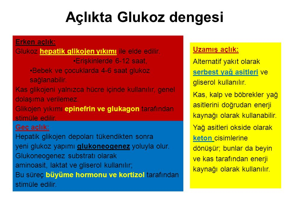 Açlıkta Glukoz dengesi Erken açlık: Glukoz hepatik glikojen yıkımı ile elde edilir.