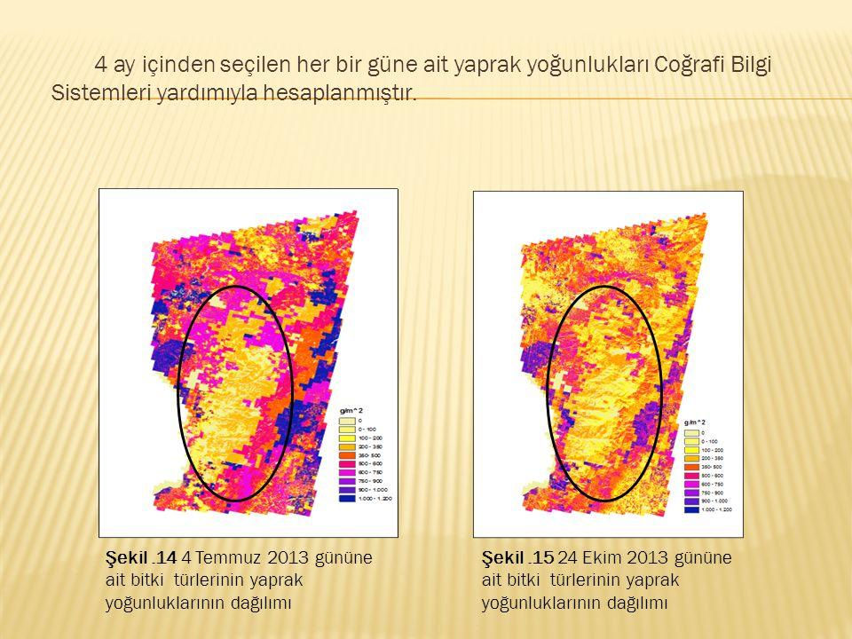 4 ay içinden seçilen her bir güne ait yaprak yoğunlukları Coğrafi Bilgi Sistemleri yardımıyla hesaplanmıştır. Şekil.14 4 Temmuz 2013 gününe ait bitki