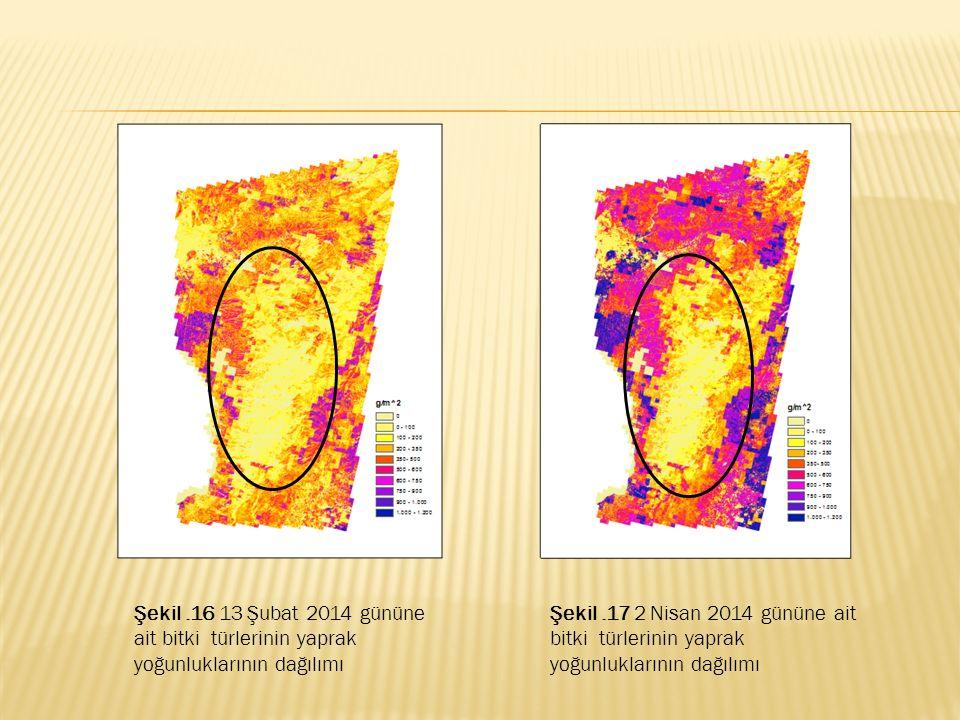 Şekil.16 13 Şubat 2014 gününe ait bitki türlerinin yaprak yoğunluklarının dağılımı Şekil.17 2 Nisan 2014 gününe ait bitki türlerinin yaprak yoğunlukla