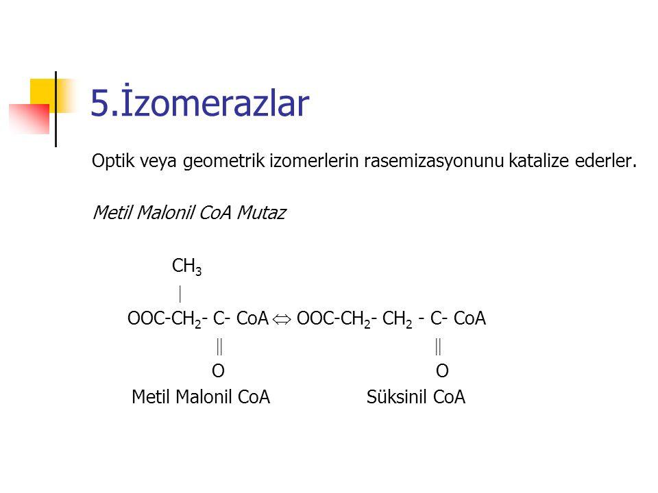 5.İzomerazlar Optik veya geometrik izomerlerin rasemizasyonunu katalize ederler. Metil Malonil CoA Mutaz CH 3  OOC-CH 2 - C- CoA  OOC-CH 2 - CH 2 -