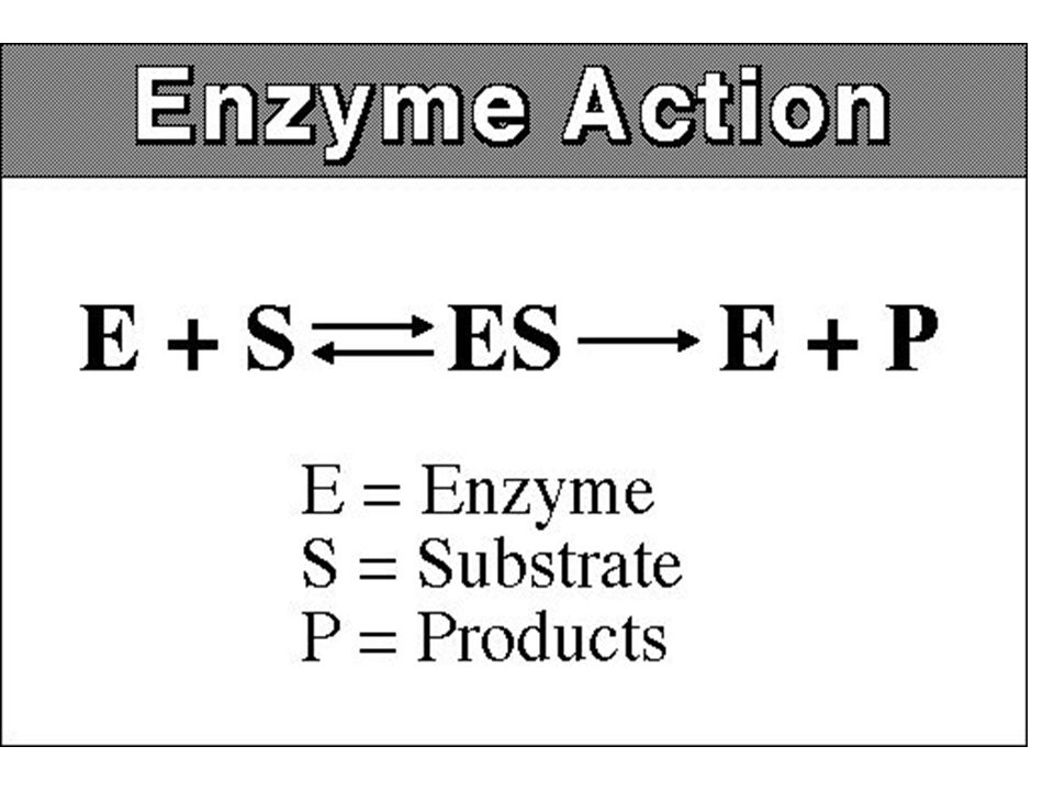 Enzimlerin Özellikleri Katalitik etkinlik; Katalizlenen reaksiyonlar 10 3 ile 10 8 kat daha etkindir Her enzim molekülü saniyede 100 ile 1000 substrat molekülünü ürüne çevirir Enzim başına düşen ürüne çevrilmiş substrat molekülü sayısına turnover sayısı denir