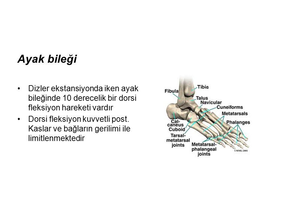 Ayak bileği Dizler ekstansiyonda iken ayak bileğinde 10 derecelik bir dorsi fleksiyon hareketi vardır Dorsi fleksiyon kuvvetli post.