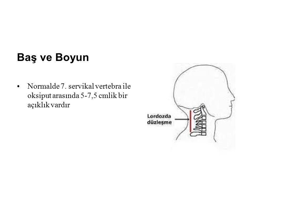 Baş ve Boyun Normalde 7. servikal vertebra ile oksiput arasında 5-7,5 cmlik bir açıklık vardır