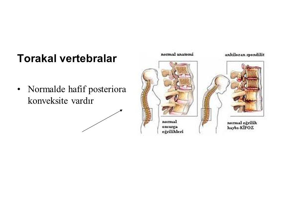 Torakal vertebralar Normalde hafif posteriora konveksite vardır