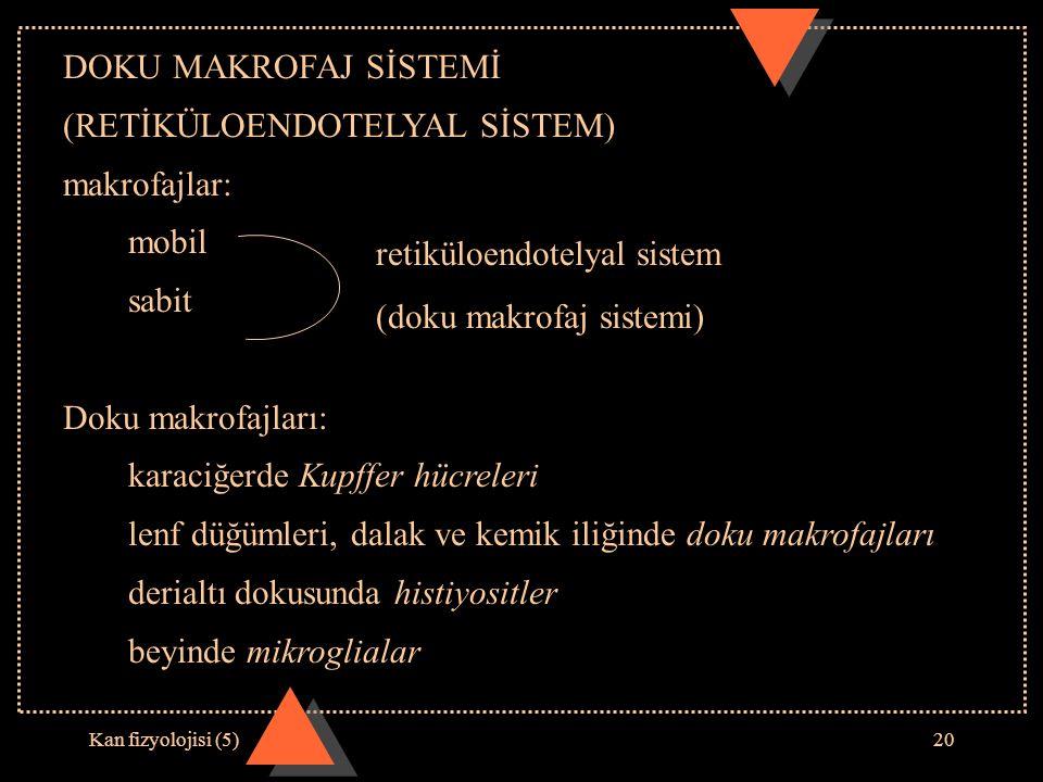 Kan fizyolojisi (5)20 DOKU MAKROFAJ SİSTEMİ (RETİKÜLOENDOTELYAL SİSTEM) makrofajlar: mobil sabit Doku makrofajları: karaciğerde Kupffer hücreleri lenf düğümleri, dalak ve kemik iliğinde doku makrofajları derialtı dokusunda histiyositler beyinde mikroglialar retiküloendotelyal sistem (doku makrofaj sistemi)