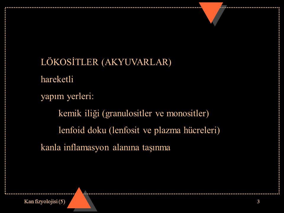 Kan fizyolojisi (5)3 LÖKOSİTLER (AKYUVARLAR) hareketli yapım yerleri: kemik iliği (granulositler ve monositler) lenfoid doku (lenfosit ve plazma hücreleri) kanla inflamasyon alanına taşınma
