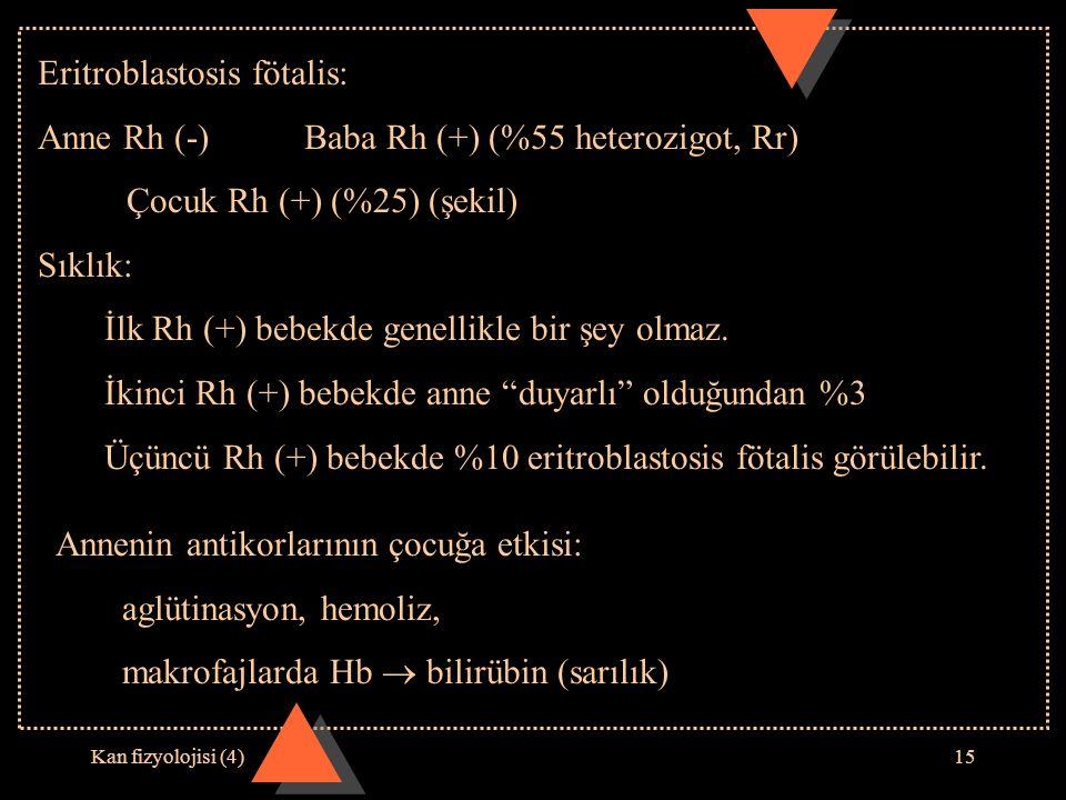 Kan fizyolojisi (4)15 Eritroblastosis fötalis: Anne Rh (-)Baba Rh (+) (%55 heterozigot, Rr) Çocuk Rh (+) (%25) (şekil) Sıklık: İlk Rh (+) bebekde gene