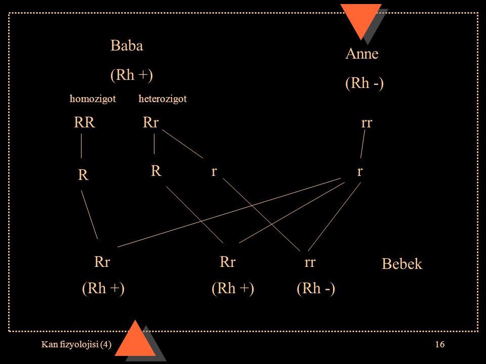 Kan fizyolojisi (4)16 RRRrrr Rrr Baba (Rh +) Anne (Rh -) Rrrr Bebek (Rh +)(Rh -) R Rr (Rh +) homozigotheterozigot