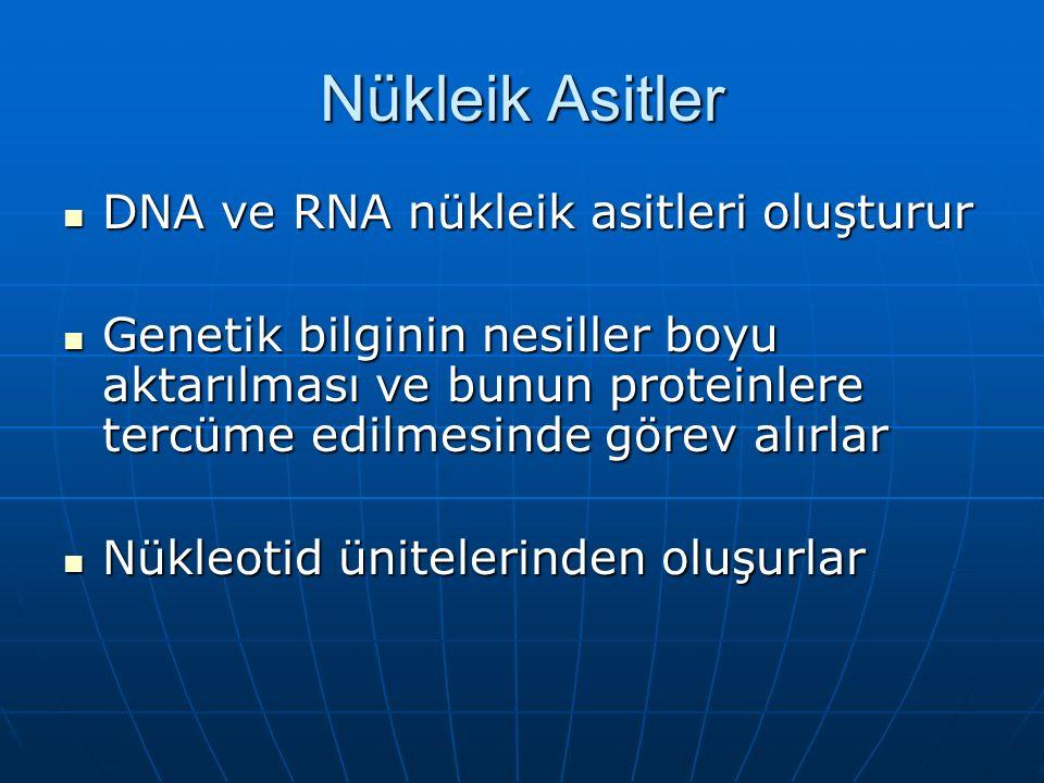 Nükleik Asitler DNA ve RNA nükleik asitleri oluşturur DNA ve RNA nükleik asitleri oluşturur Genetik bilginin nesiller boyu aktarılması ve bunun proteinlere tercüme edilmesinde görev alırlar Genetik bilginin nesiller boyu aktarılması ve bunun proteinlere tercüme edilmesinde görev alırlar Nükleotid ünitelerinden oluşurlar Nükleotid ünitelerinden oluşurlar