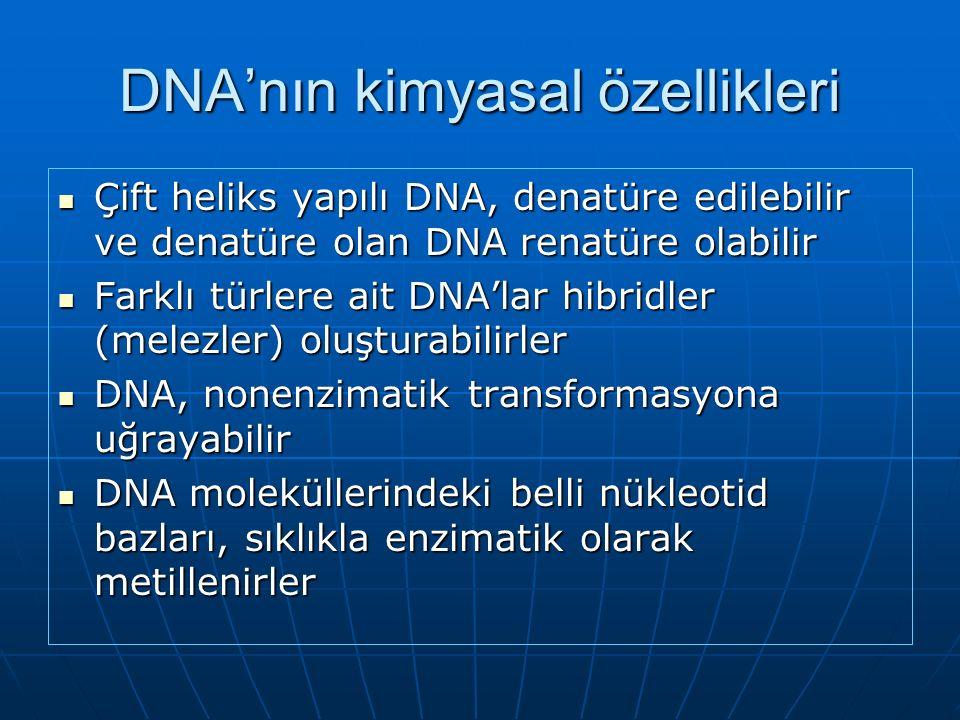DNA'nın kimyasal özellikleri Çift heliks yapılı DNA, denatüre edilebilir ve denatüre olan DNA renatüre olabilir Çift heliks yapılı DNA, denatüre edilebilir ve denatüre olan DNA renatüre olabilir Farklı türlere ait DNA'lar hibridler (melezler) oluşturabilirler Farklı türlere ait DNA'lar hibridler (melezler) oluşturabilirler DNA, nonenzimatik transformasyona uğrayabilir DNA, nonenzimatik transformasyona uğrayabilir DNA moleküllerindeki belli nükleotid bazları, sıklıkla enzimatik olarak metillenirler DNA moleküllerindeki belli nükleotid bazları, sıklıkla enzimatik olarak metillenirler