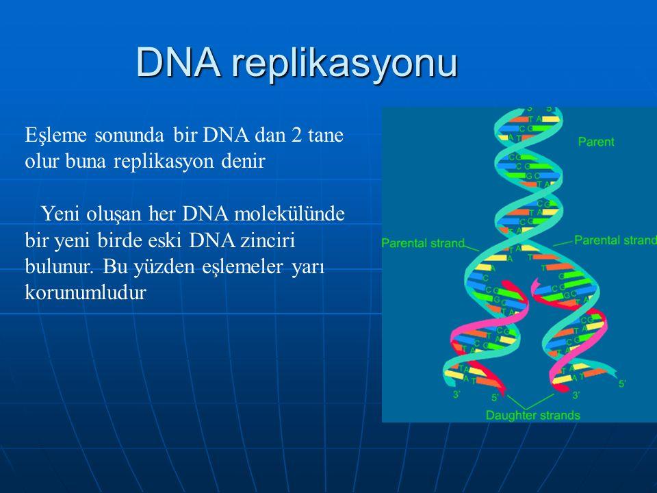 DNA replikasyonu Eşleme sonunda bir DNA dan 2 tane olur buna replikasyon denir Yeni oluşan her DNA molekülünde bir yeni birde eski DNA zinciri bulunur.