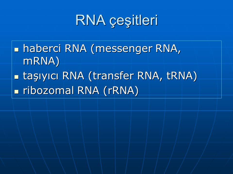 RNA çeşitleri haberci RNA (messenger RNA, mRNA) haberci RNA (messenger RNA, mRNA) taşıyıcı RNA (transfer RNA, tRNA) taşıyıcı RNA (transfer RNA, tRNA) ribozomal RNA (rRNA) ribozomal RNA (rRNA)