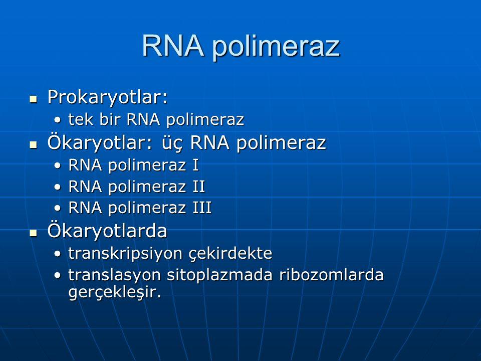 RNA polimeraz Prokaryotlar: Prokaryotlar: tek bir RNA polimeraztek bir RNA polimeraz Ökaryotlar: üç RNA polimeraz Ökaryotlar: üç RNA polimeraz RNA polimeraz IRNA polimeraz I RNA polimeraz IIRNA polimeraz II RNA polimeraz IIIRNA polimeraz III Ökaryotlarda Ökaryotlarda transkripsiyon çekirdektetranskripsiyon çekirdekte translasyon sitoplazmada ribozomlarda gerçekleşir.translasyon sitoplazmada ribozomlarda gerçekleşir.