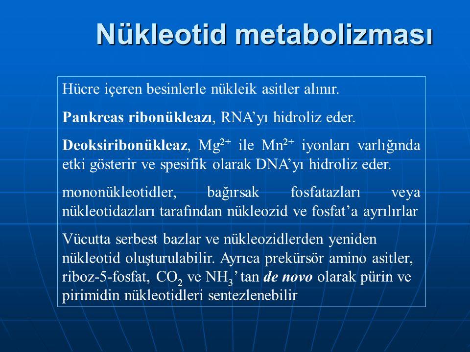 Nükleotid metabolizması Hücre içeren besinlerle nükleik asitler alınır.
