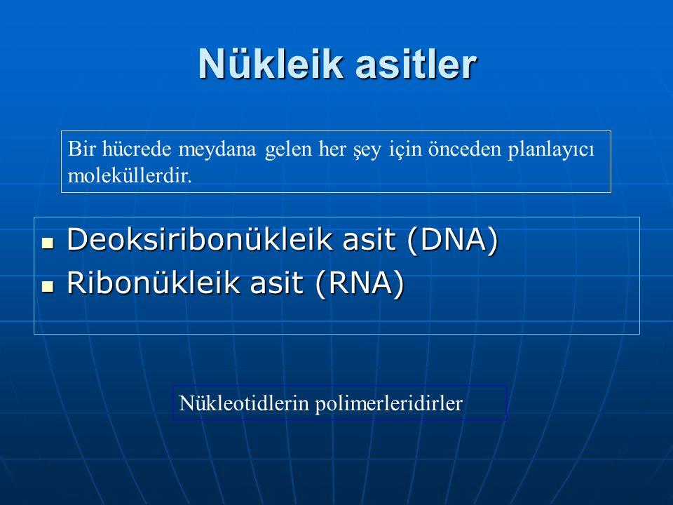 Nükleik asitler Deoksiribonükleik asit (DNA) Deoksiribonükleik asit (DNA) Ribonükleik asit (RNA) Ribonükleik asit (RNA) Nükleotidlerin polimerleridirler Bir hücrede meydana gelen her şey için önceden planlayıcı moleküllerdir.
