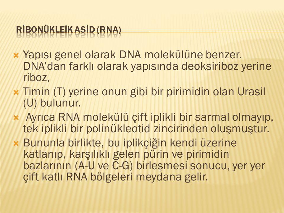  Yapısı genel olarak DNA molekülüne benzer. DNA'dan farklı olarak yapısında deoksiriboz yerine riboz,  Timin (T) yerine onun gibi bir pirimidin olan