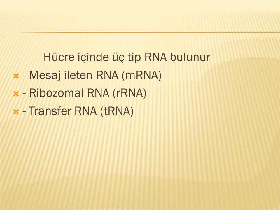 Hücre içinde üç tip RNA bulunur  - Mesaj ileten RNA (mRNA)  - Ribozomal RNA (rRNA)  - Transfer RNA (tRNA)