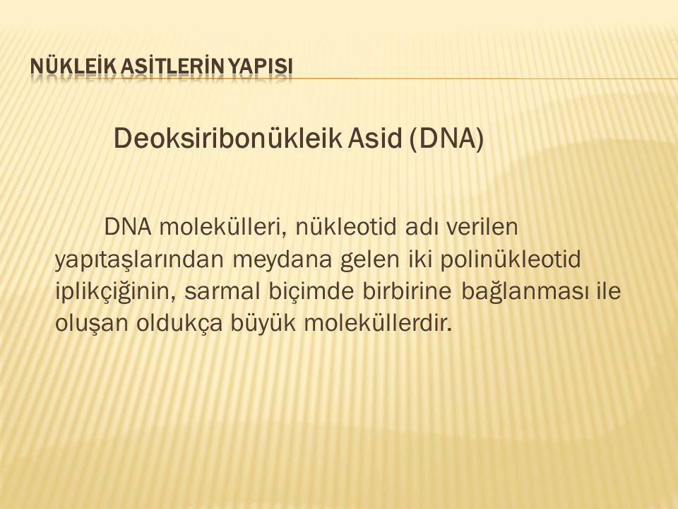 Deoksiribonükleik Asid (DNA) DNA molekülleri, nükleotid adı verilen yapıtaşlarından meydana gelen iki polinükleotid iplikçiğinin, sarmal biçimde birbi