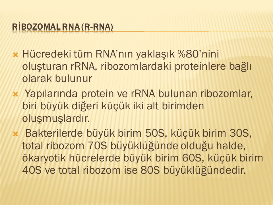  Hücredeki tüm RNA'nın yaklaşık %80'nini oluşturan rRNA, ribozomlardaki proteinlere bağlı olarak bulunur  Yapılarında protein ve rRNA bulunan ribozo