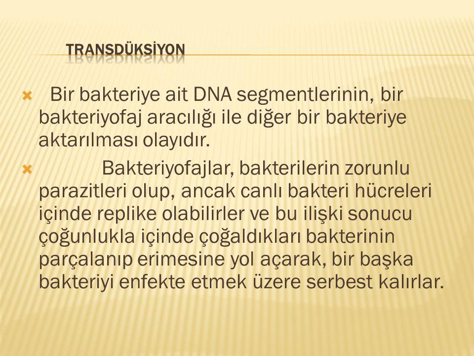  Bir bakteriye ait DNA segmentlerinin, bir bakteriyofaj aracılığı ile diğer bir bakteriye aktarılması olayıdır.  Bakteriyofajlar, bakterilerin zorun