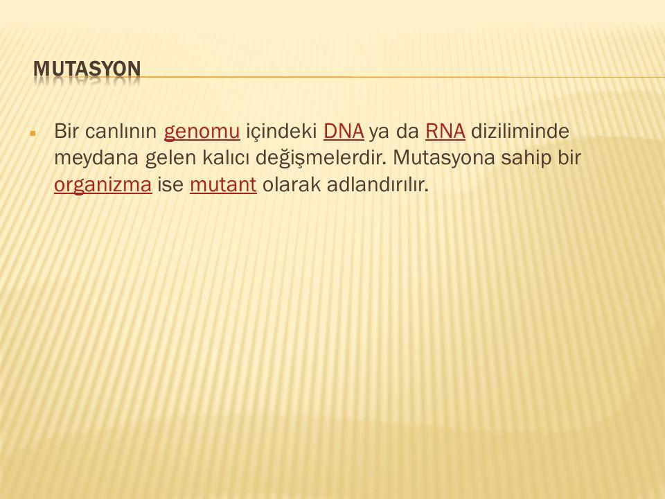  Bir canlının genomu içindeki DNA ya da RNA diziliminde meydana gelen kalıcı değişmelerdir. Mutasyona sahip bir organizma ise mutant olarak adlandırı