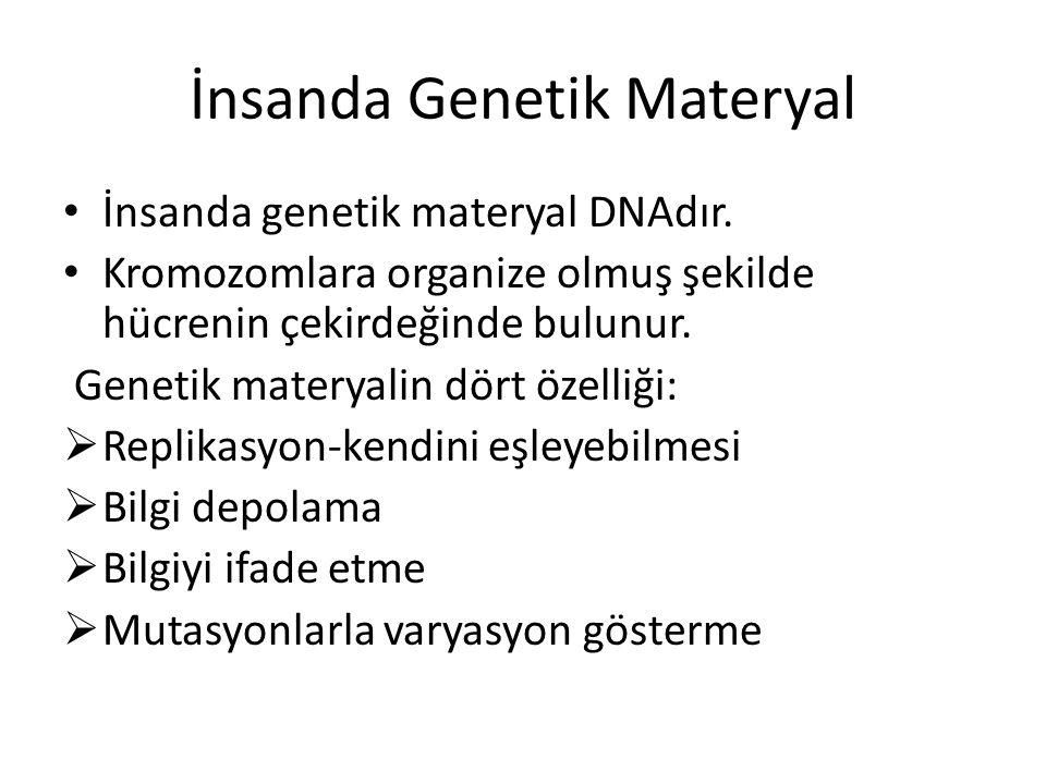 İnsanda Genetik Materyal İnsanda genetik materyal DNAdır. Kromozomlara organize olmuş şekilde hücrenin çekirdeğinde bulunur. Genetik materyalin dört ö