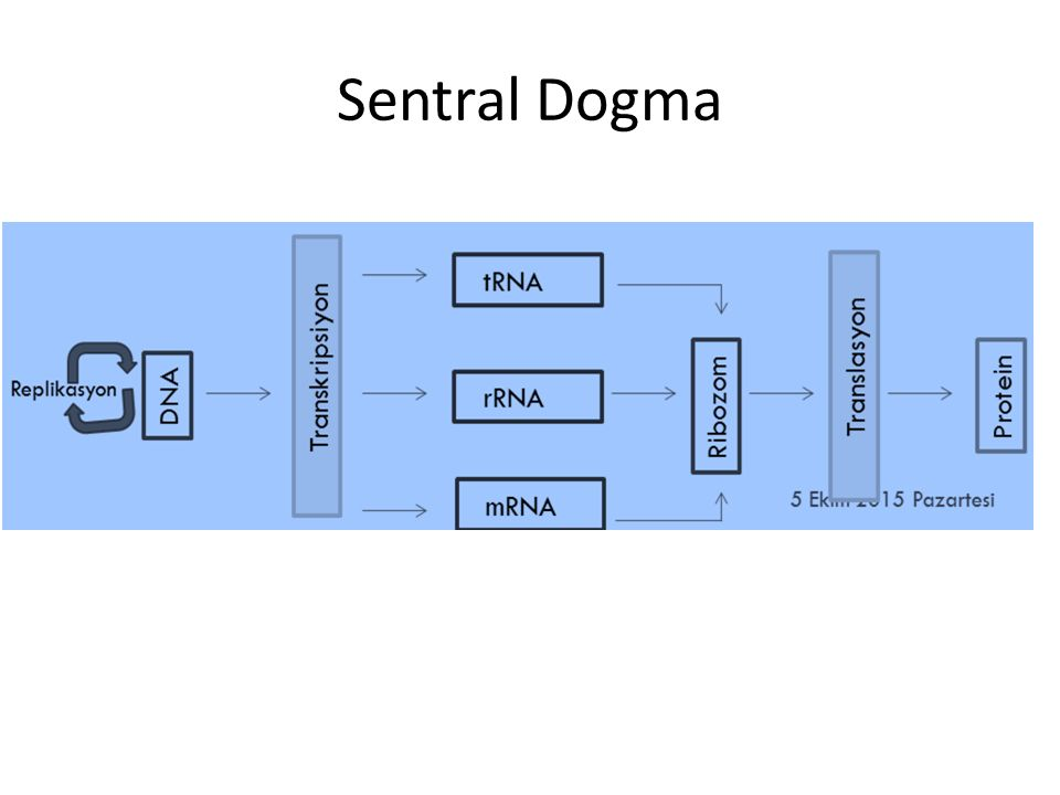 Sentral Dogma