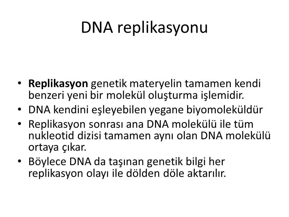 DNA replikasyonu Replikasyon genetik materyelin tamamen kendi benzeri yeni bir molekül oluşturma işlemidir. DNA kendini eşleyebilen yegane biyomolekül