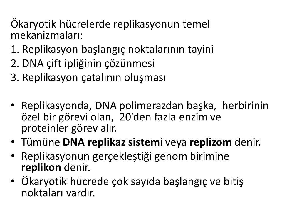 Ökaryotik hücrelerde replikasyonun temel mekanizmaları: 1. Replikasyon başlangıç noktalarının tayini 2. DNA çift ipliğinin çözünmesi 3. Replikasyon ça