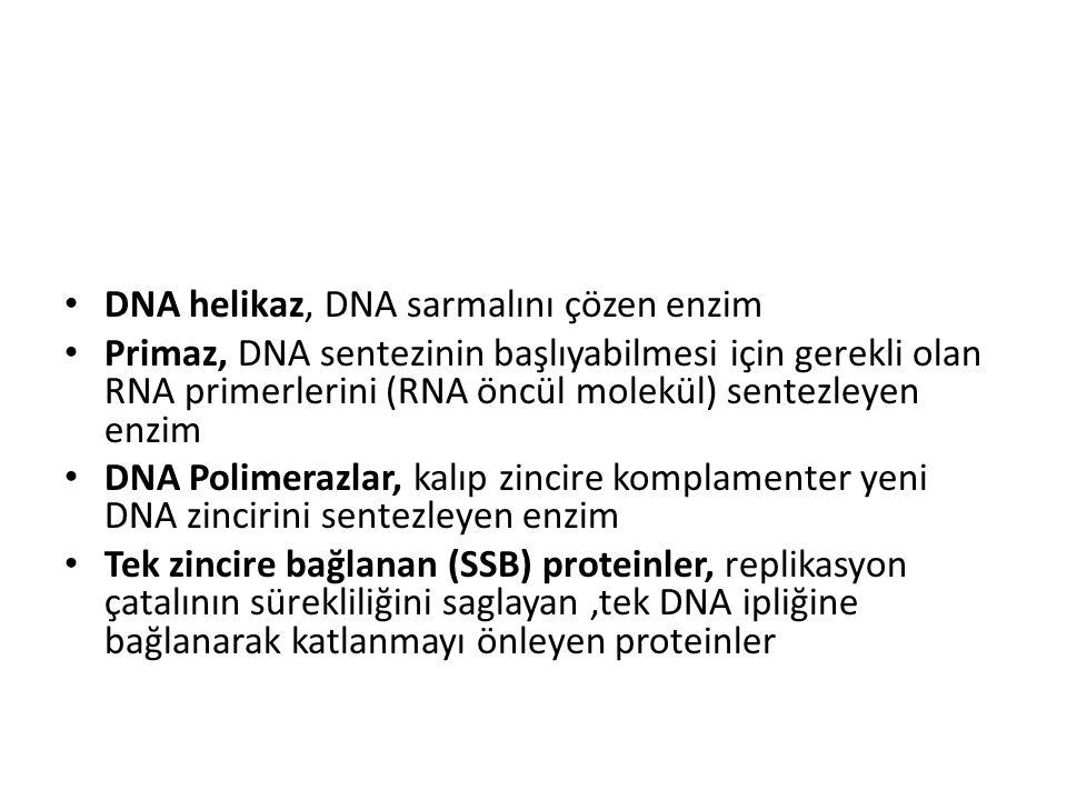 DNA helikaz, DNA sarmalını çözen enzim Primaz, DNA sentezinin başlıyabilmesi için gerekli olan RNA primerlerini (RNA öncül molekül) sentezleyen enzim