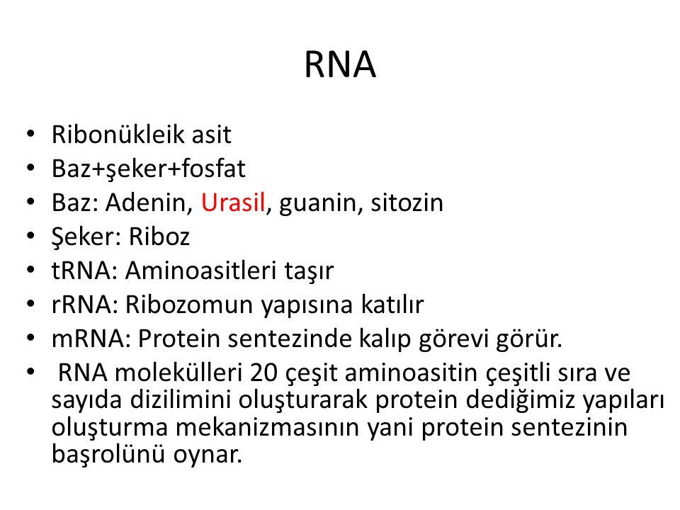 RNA Ribonükleik asit Baz+şeker+fosfat Baz: Adenin, Urasil, guanin, sitozin Şeker: Riboz tRNA: Aminoasitleri taşır rRNA: Ribozomun yapısına katılır mRN