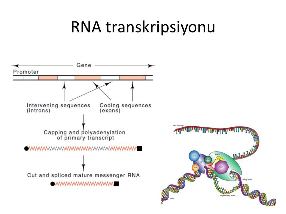 RNA transkripsiyonu