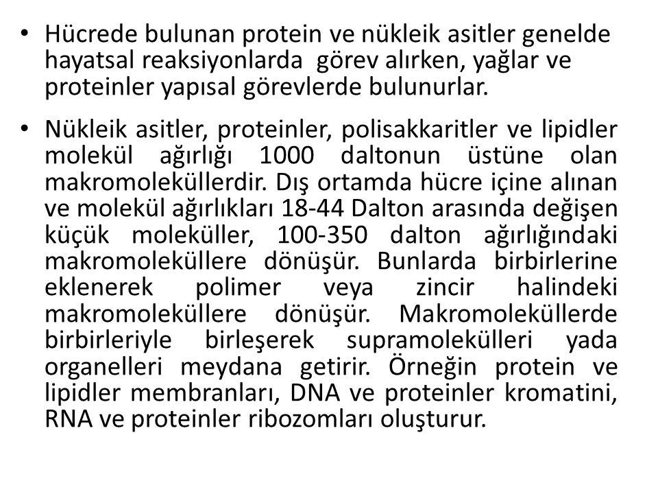 Hücrede bulunan protein ve nükleik asitler genelde hayatsal reaksiyonlarda görev alırken, yağlar ve proteinler yapısal görevlerde bulunurlar. Nükleik