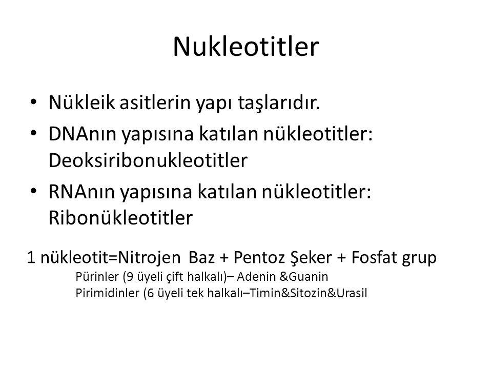 Nukleotitler Nükleik asitlerin yapı taşlarıdır. DNAnın yapısına katılan nükleotitler: Deoksiribonukleotitler RNAnın yapısına katılan nükleotitler: Rib