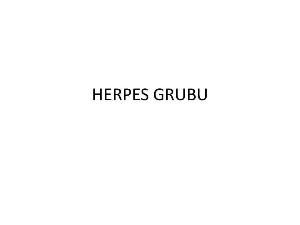 HERPES GRUBU