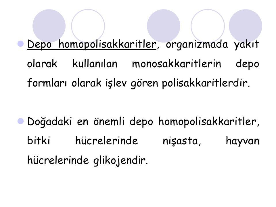 Depo homopolisakkaritler, organizmada yakıt olarak kullanılan monosakkaritlerin depo formları olarak işlev gören polisakkaritlerdir. Doğadaki en öneml