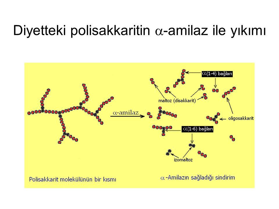 Diyetteki polisakkaritin  -amilaz ile yıkımı