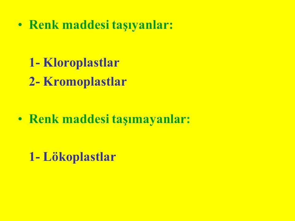 Renk maddesi taşıyanlar: 1- Kloroplastlar 2- Kromoplastlar Renk maddesi taşımayanlar: 1- Lökoplastlar