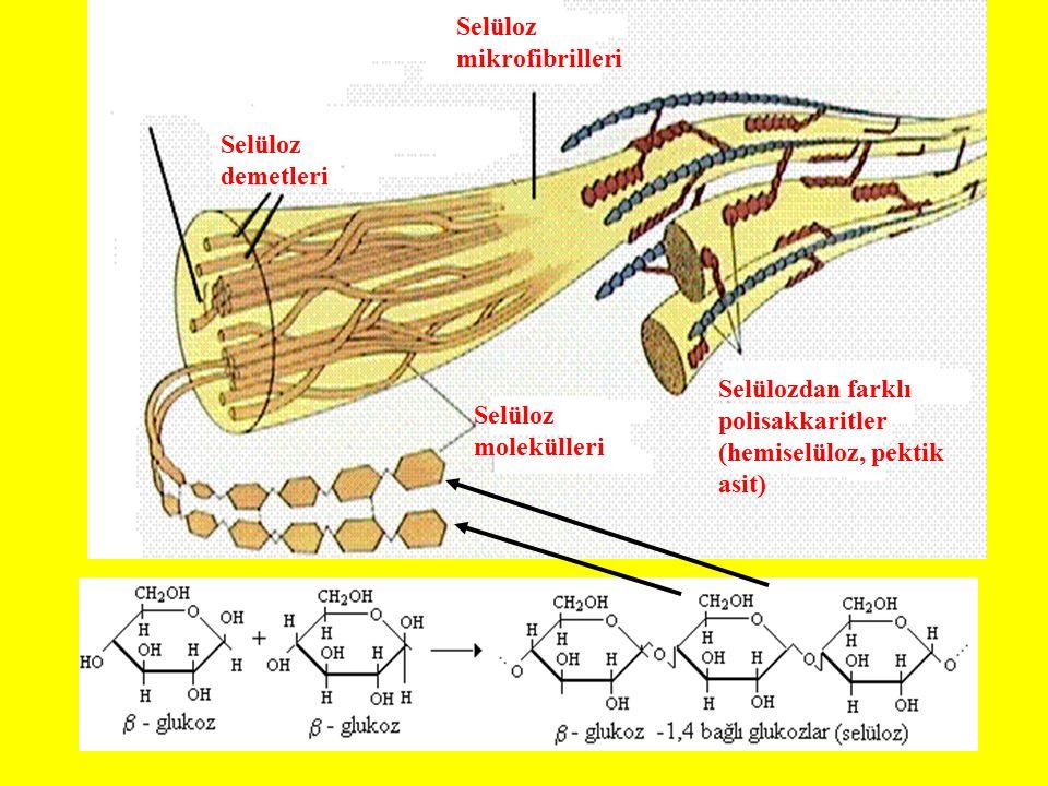 Selüloz molekülleri Selüloz demetleri Selüloz mikrofibrilleri Selülozdan farklı polisakkaritler (hemiselüloz, pektik asit)