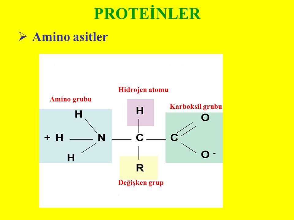 PROTEİNLER  Amino asitler Hidrojen atomu Amino grubu Karboksil grubu Değişken grup