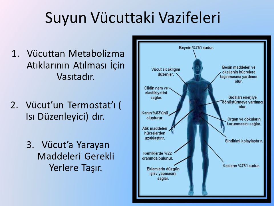 Suyun Vücuttaki Vazifeleri 1.Vücuttan Metabolizma Atıklarının Atılması İçin Vasıtadır. 2.Vücut'un Termostat'ı ( Isı Düzenleyici) dır. 3.Vücut'a Yaraya