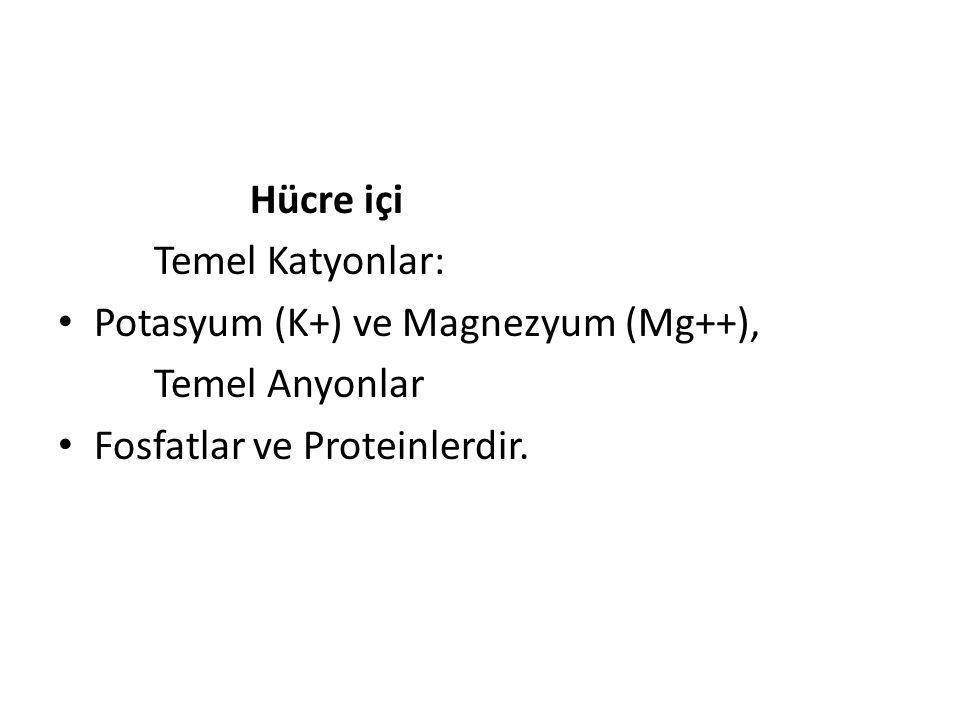 Hücre içi Temel Katyonlar: Potasyum (K+) ve Magnezyum (Mg++), Temel Anyonlar Fosfatlar ve Proteinlerdir.