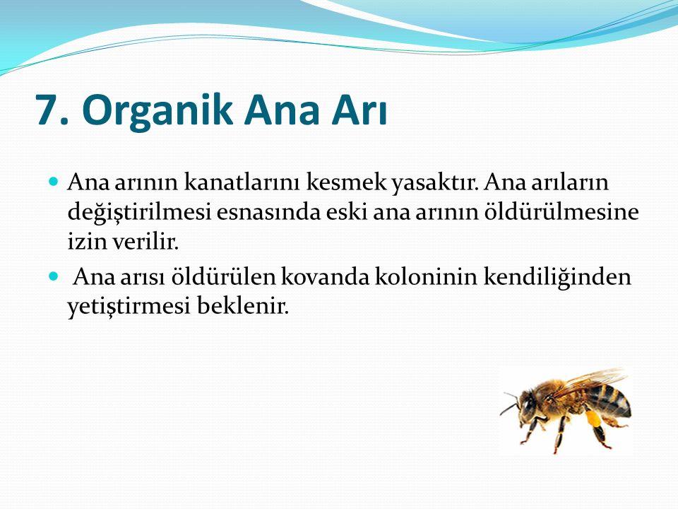 7.Organik Ana Arı Ana arının kanatlarını kesmek yasaktır.